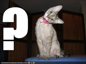 lolcats-funny-pictures-questionmark