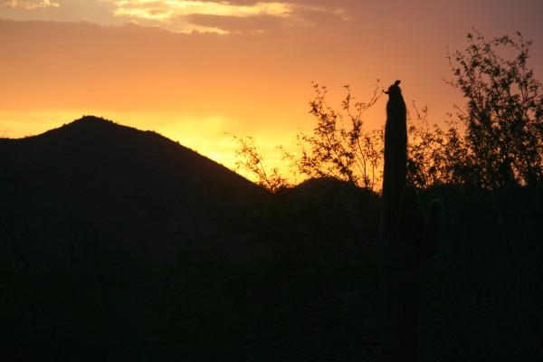 desert sunsets 2011 (5)